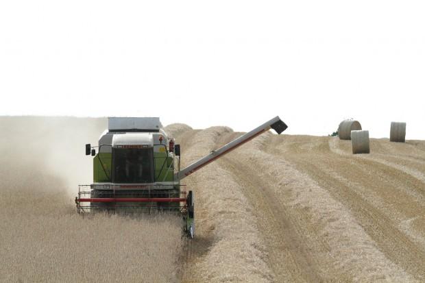 Rosja: Kolejna obniżka prognozy zbiorów zbóż