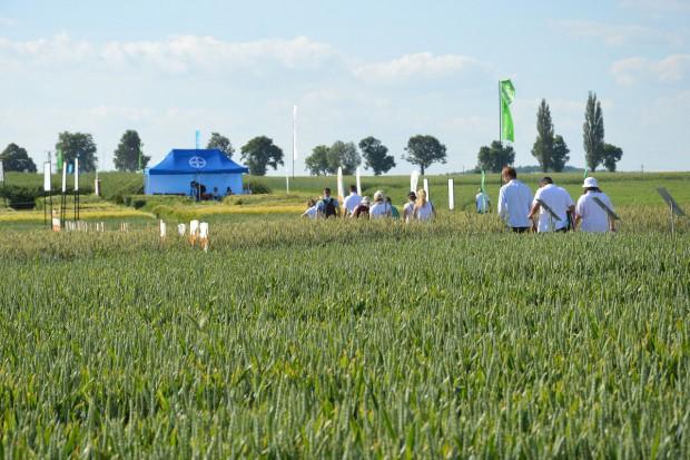 Przepis Bayera na zdrową pszenicę, bez chwastów