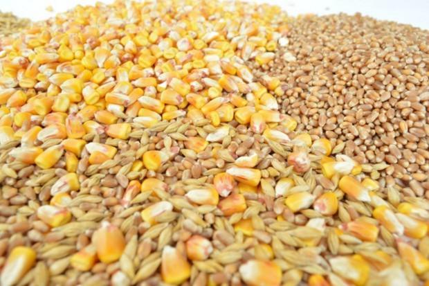Giełdy krajowe: Ceny zbóz wysokie, niewielu kupujących