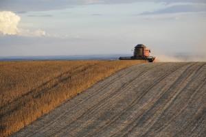IGC: Prognozy światowej produkcji soi bez zmian