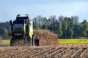 Niemcy: W 2016 r. zebrano średnio 430 dt/ha kukurydzy na kiszonkę