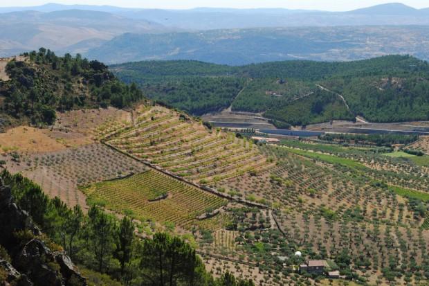 Portugalia: Produkcja oliwy z oliwek mniejsza o ponad 40 proc.