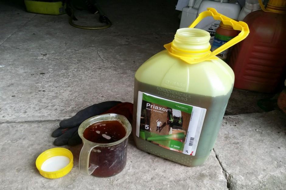 Na kłos zastosowałem fungicyd Priaxor w dawce 0,7 l/ha