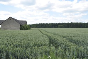 1 września ruszy Krajowy Ośrodek Wsparcia Rolnictwa
