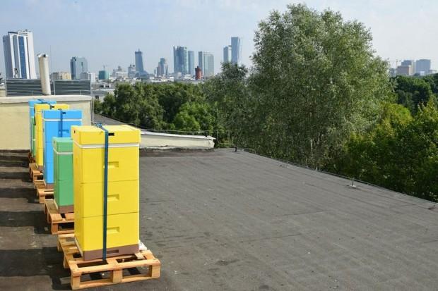 Na dachu resortu środowiska zamieszkały pszczoły