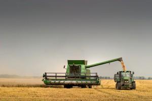 Rosja: Zbiory zbóż powinny przekroczyć 105 mln ton