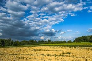 Podkarpackie: Powstanie strategia rozwoju rolnictwa i obszarów wiejskich