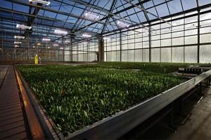 Energooszczędne systemy świetlne Grow Light w produkcji roślinnej