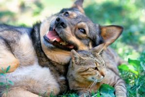Resort rolnictwa pracuje nad przepisami dot. rejestracji psów i kotów