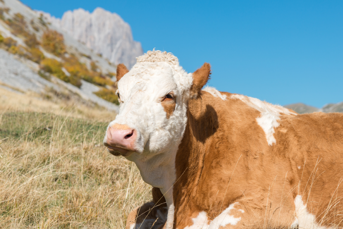Arabski koncern mleczarski chce inwestować w energię odnawialną