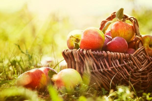 Bronisze: W sprzedaży są już tegoroczne jabłka