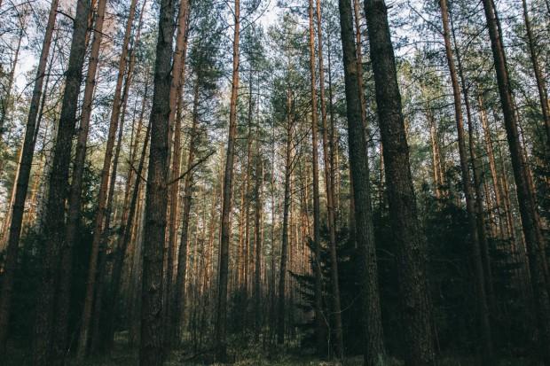 Lasy Państwowe: Mamy ok. 600 tys. ha, które mogą trafić do zasobów KZN