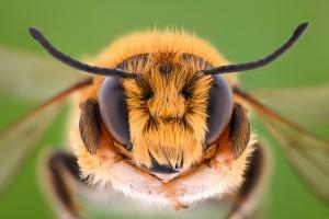 Proekologiczne projekty Ciechanowa dla owadów, w tym pszczół