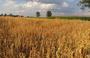Zmienne ceny w skupach rolnych