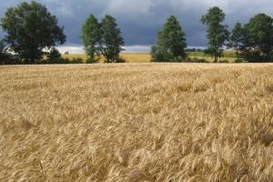 IUNG: Nie notujemy suszy w kraju