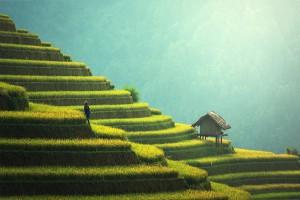 Chiny: Propozycja dla młodych rolników
