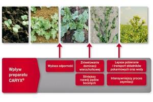 Caryx® - stosowanie w zależności od stanu plantacji