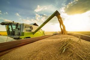 Ukraina oczekuje zbiorów zbóż powyżej 60 mln ton