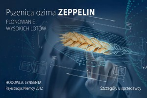 Zeppelin- pszenica do zadań specjalnych