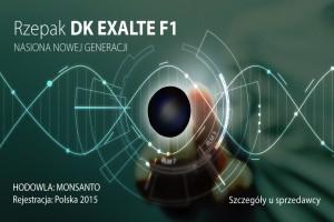 Rzepak ozimy F1 DK Exalte- znakomity potencjał plonotwórczy