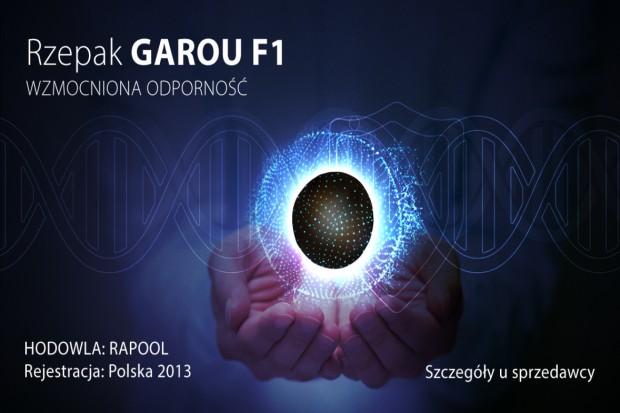 Rzepak ozimy Garou F1- wybitna zimotrwałość i odporność na choroby