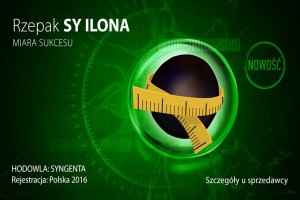 Rzepak ozimy SY Ilona - nowy standard wśród odmian liniowych