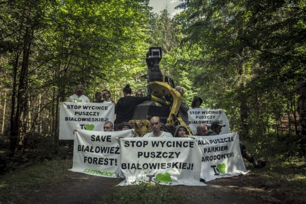 Proces osób obwinionych wz. z blokowaniem wycinki w Puszczy Białowieskiej