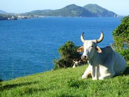 Brazylijski eksport mięsa wraca na prostą