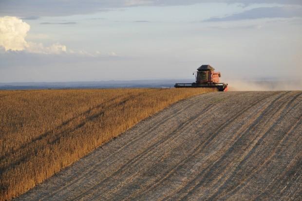 KE: Zbiory zbóż w UE poniżej średnich