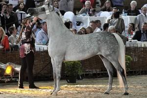 Prezes stadniny w Janowie: Konie arabskie czystej krwi to jedna z najstarszych ras świata