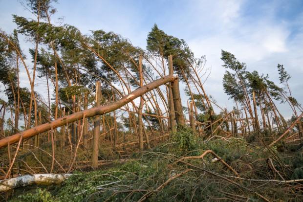 Lasy Państwowe wprowadzą tzw. stan siły wyższej o zasięgu ponadlokalnym