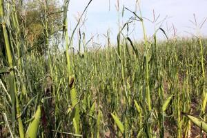 NSZZ Solidarność RI wnioskuje o pomoc dla zachodniopomorskich rolników