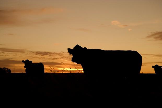 BSE – obecna sytuacja na świecie, podsumowanie przebiegu epidemii