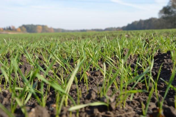 Ustalanie jesiennej dawki nawożenia fosforem i potasem