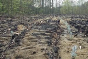 Złagodzenie przepisów związanych ze zwrotem pomocy na zalesienie