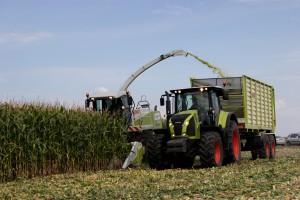 Dłuższa sieczka z kukurydzy zamiast słomy?