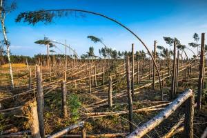 PSL apeluje do rządu o pomoc dla rolników w woj. zachodniopomorskim