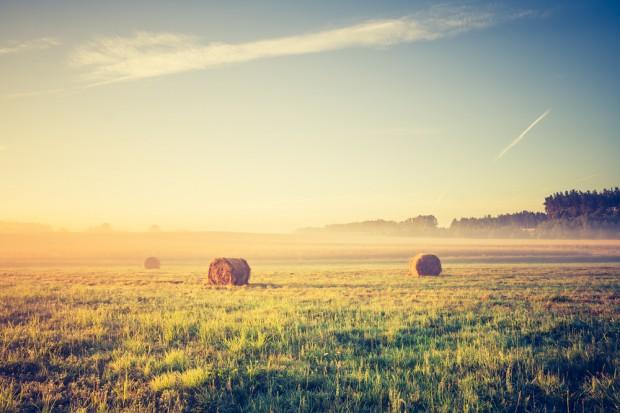 ARiMR: Do 500 tys. zł na wsparcie inwestycji w gospodarstwach na terenach Natura 2000