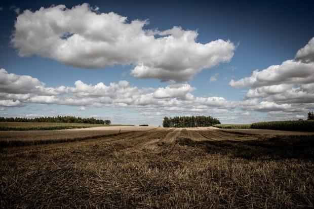 Co będzie obszarem proekologicznym EFA od 2018 roku?