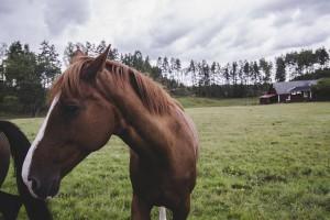 Szwecja: Wysokie ceny gruntów rolnych
