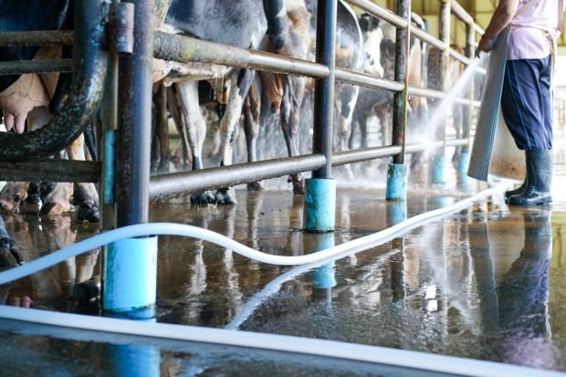 MRiRW: Nowe warunki pracy przy obsłudze zwierząt