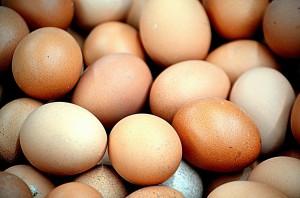 Prawie pół miliona jajek z fipronilem wycofano z bułgarskiego rynku