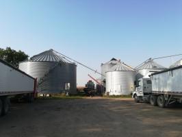 Zrównoważone rolnictwo w stylu amerykańskim [Zdjęcia]