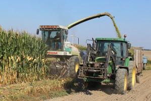 Zbiór kukurydzy na kiszonkę – czym i za ile?