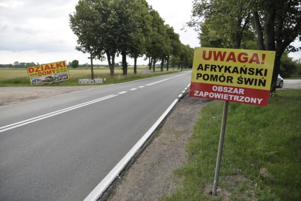 Setne ognisko ASF u trzody chlewnej w Polsce