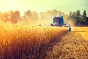 Ekspert: Niezwykle trudny rok dla producentów zbóż