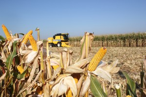 XIX Dni Kukurydzy w Skrzelewie