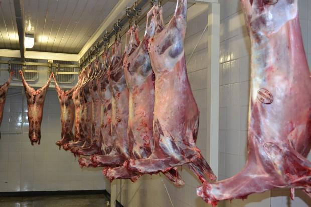 Zwierzęta łowne to nie tylko problem: Wartość dietetyczna i odżywcza dziczyzny