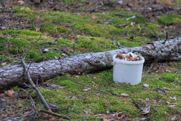 Podkarpackie: 90 osób całą noc szukało grzybiarza