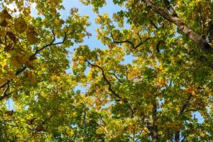 Konferencja: Walka ze zmianami klimatu wymaga zdrowych i produktywnych lasów